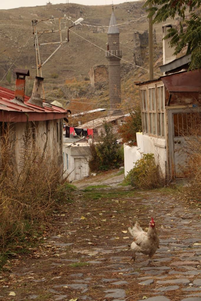 前往卡爾斯堡壘路上的雞群