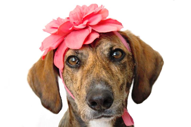 koira valokuvaus