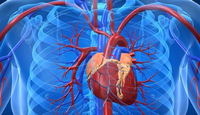 Hệ thống mạch vành nuôi tim