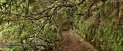 Caminhos (Santana, Madeira)