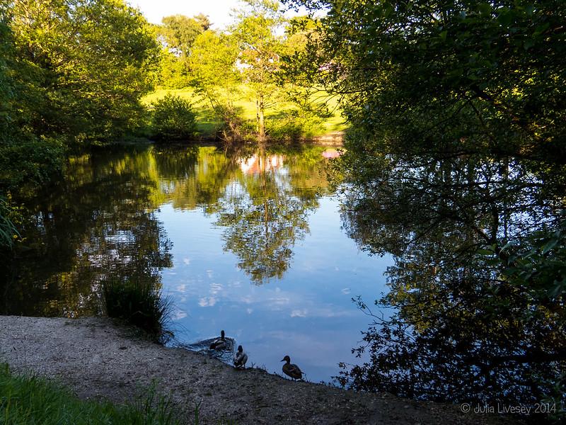 Nea Meadows Pond
