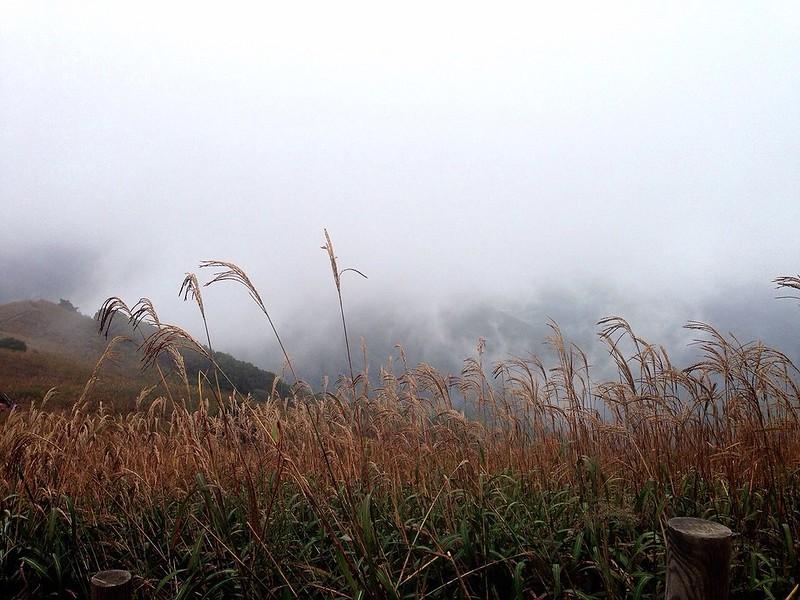 구름 속의 민둥산, 억새.