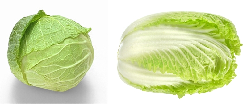 Savoy vs. Napa Cabbage
