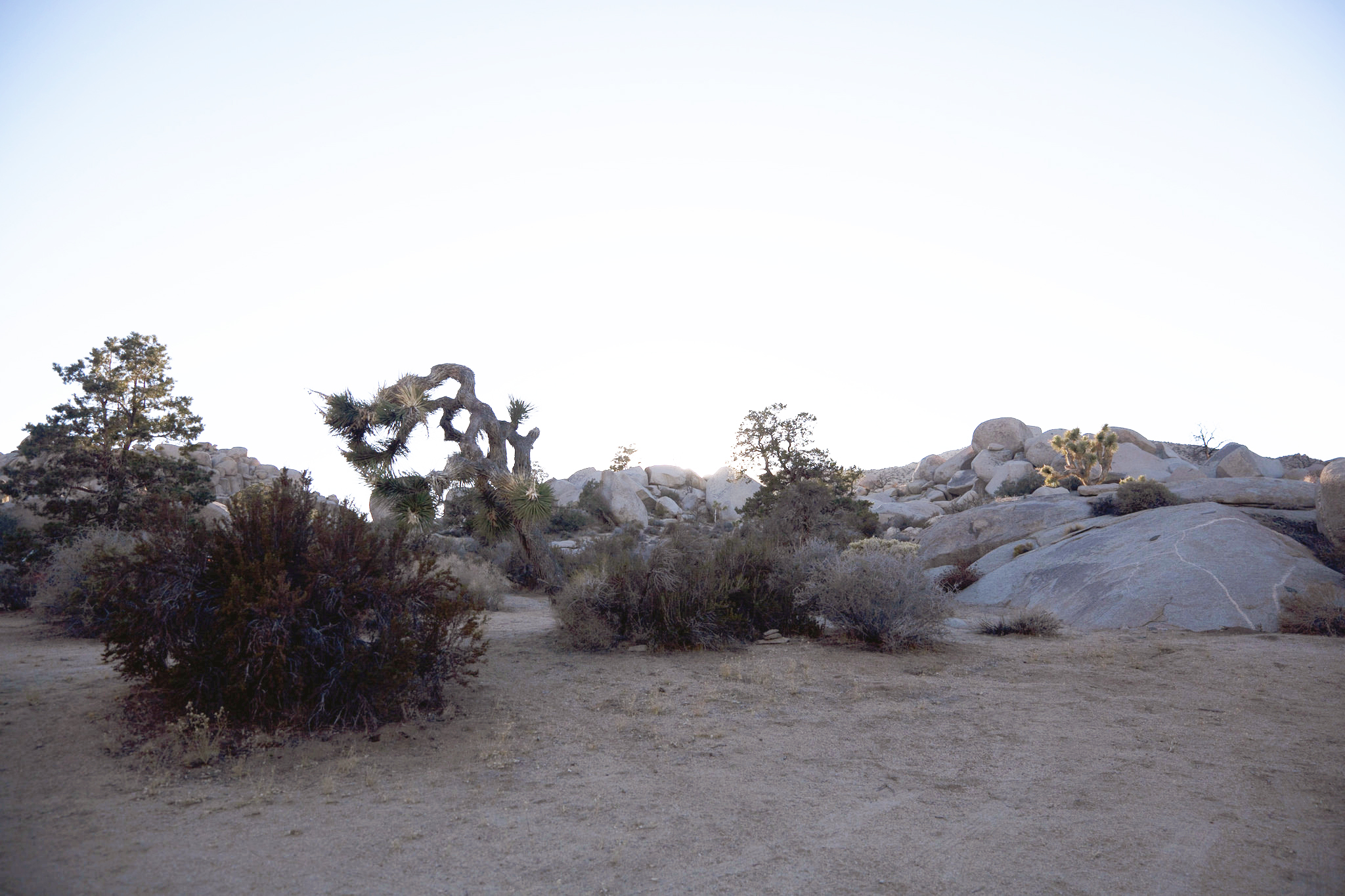 joshuatree_4_edit
