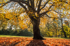 Manchester Autumn by R6Lad