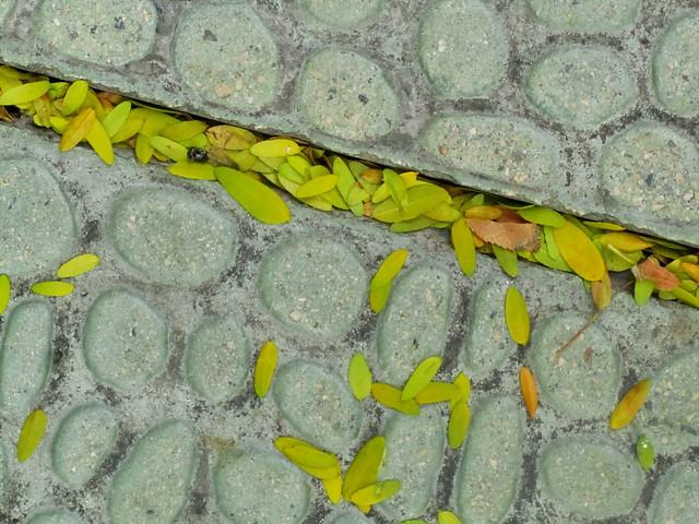 Grieta con hojas
