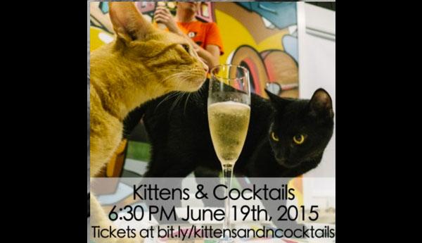 kittens-cocktails