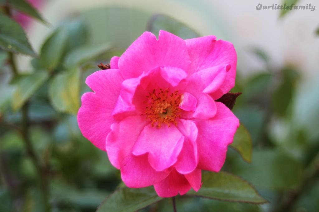 mon jardin 3