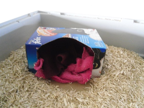 Felix wet cat food box in rat cage