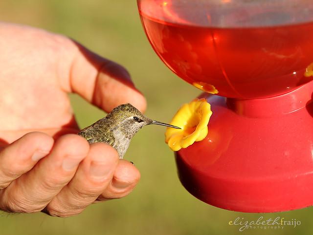 Hummingbird04W