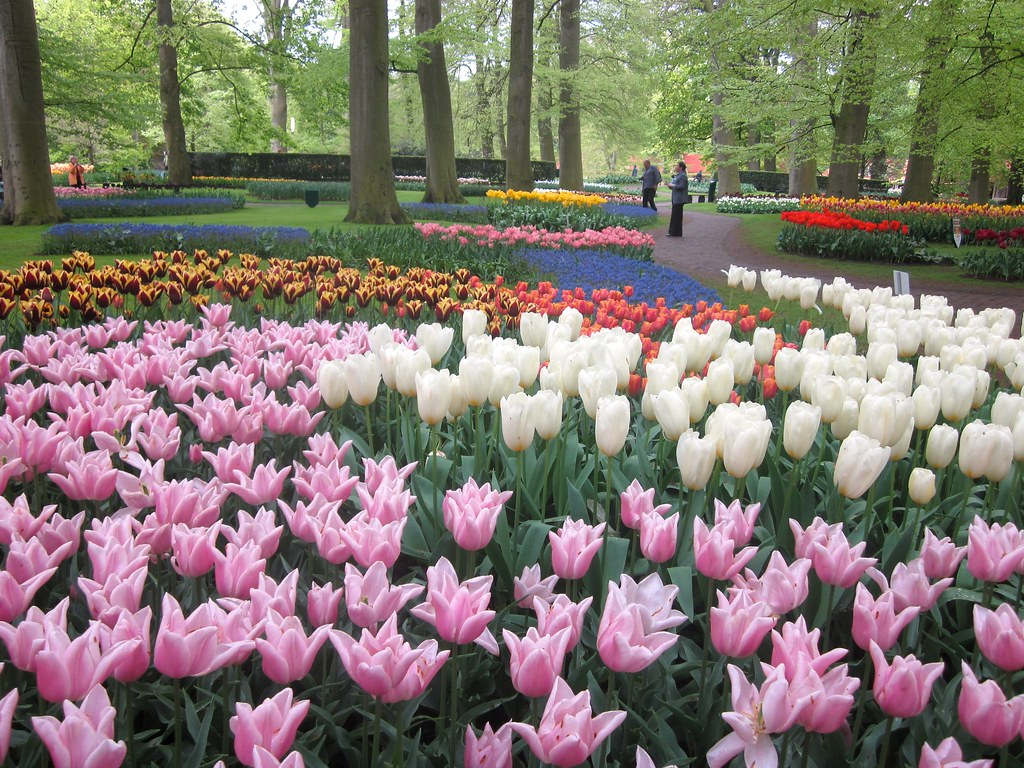 Keukenhof Gardens - Tulips
