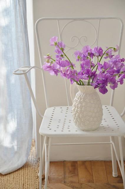 lilac lathyrus