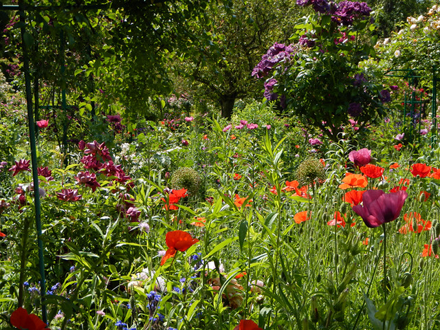 Brilliantly coloured flowers in Monet's garden in Giverny, France