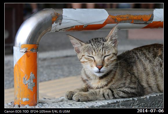 201400706_Cat_7