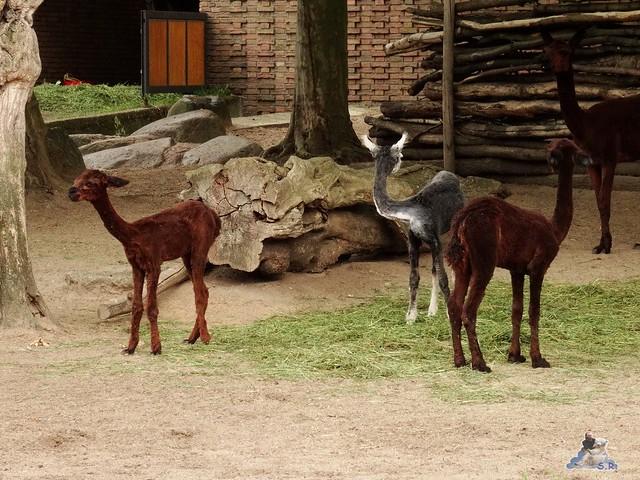 Zoo Berlin 26.06.2015  95