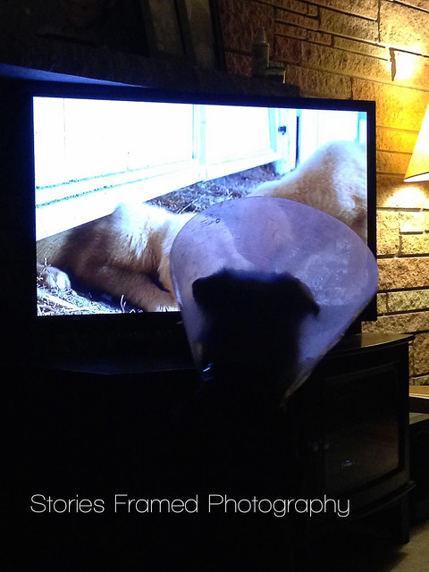 88. | conehead watches tv.