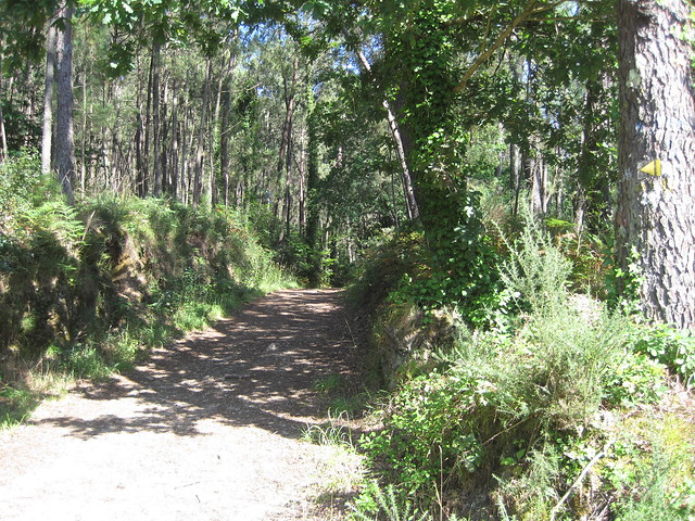 Sendero en el Ruta Ponte Nafonso - Tambre