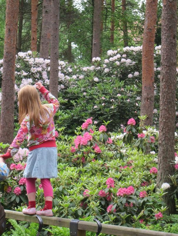 Rhododendron Park, Helsinki