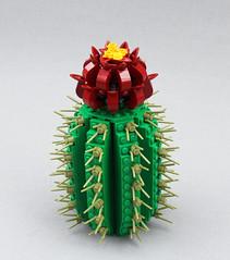 Desert Flower by Brother Steven