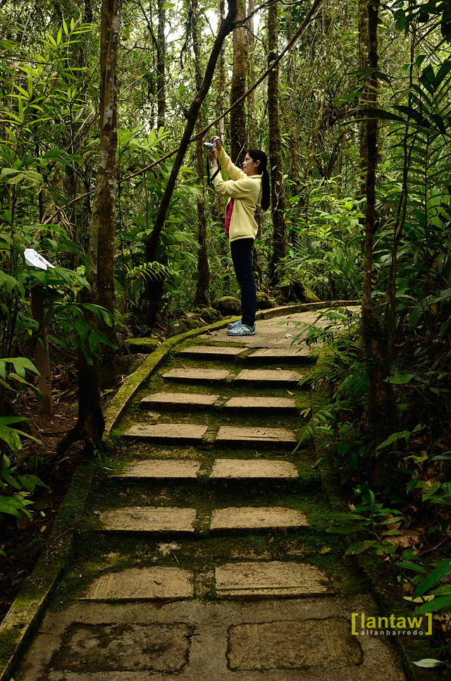 Kinabalu Park Botanical Garden
