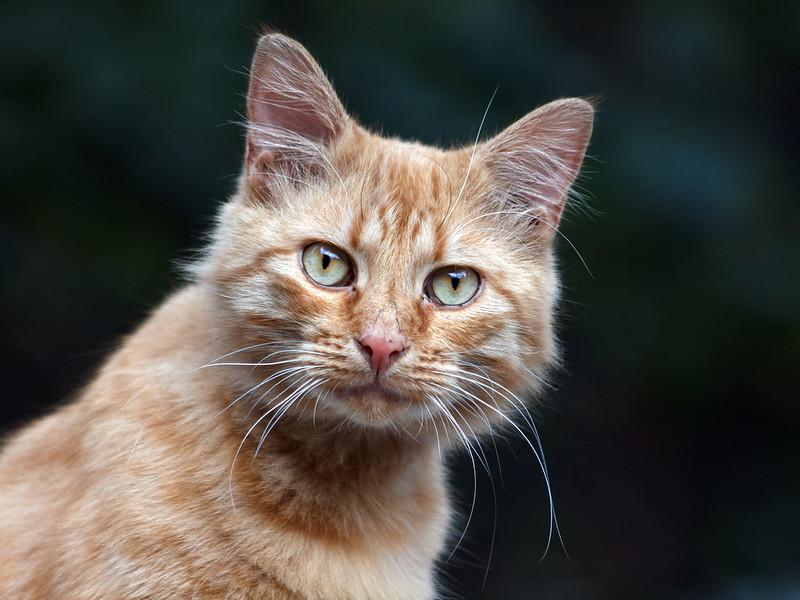 Red cat 22