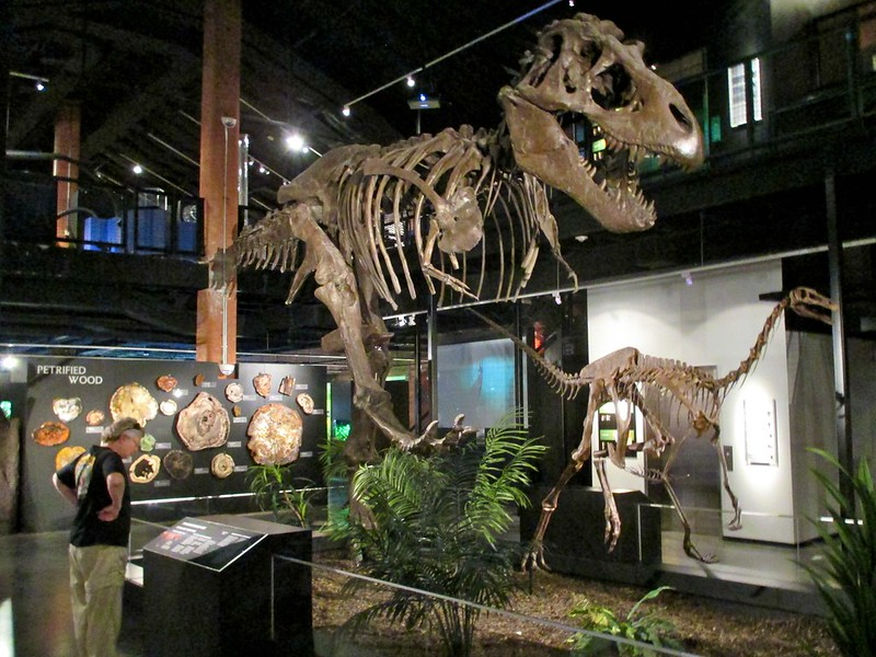 Cretaceous Dinner