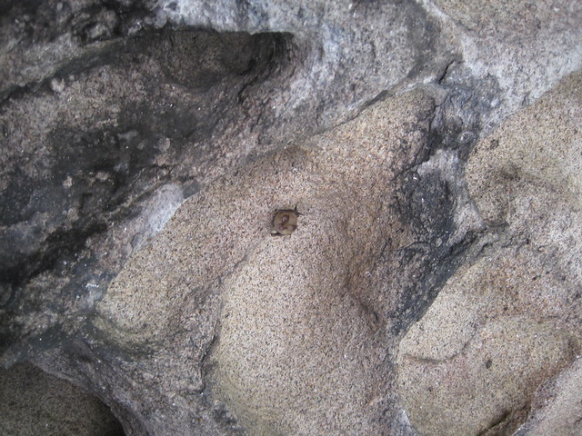 Murciélago en la Pedra Miranda