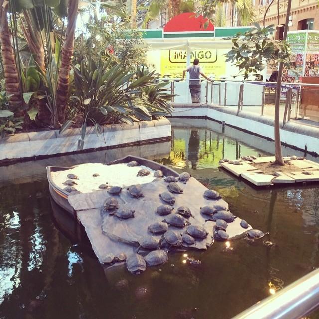Turtles Atocha train station Madrid