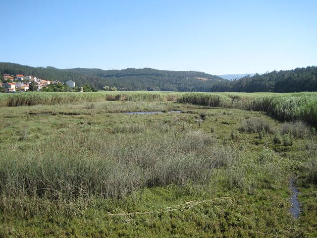 Humedales del Tambre en el Ruta Ponte Nafonso - Tambre