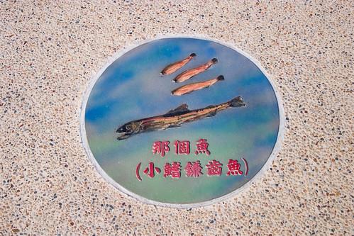 到屏東東港碼頭看海去 (10)
