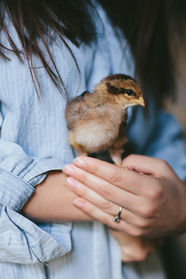 My Chickens | Bebe 1 week old by Eva Kosmas Flores of Adventures in Cooking