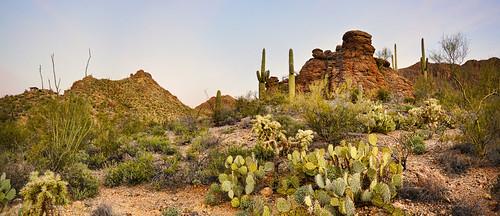 Sonoran Desert Landscape Flickr Photo Sharing
