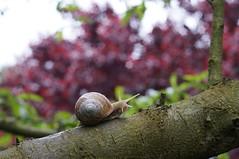 Snail climber