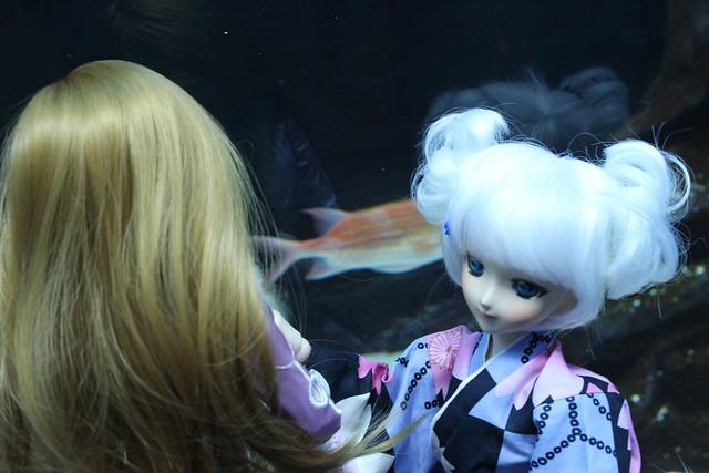 dd aquarium 6