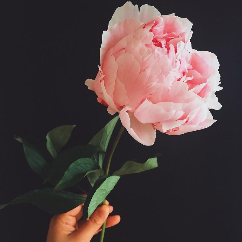 Dark Floral Pink Peony