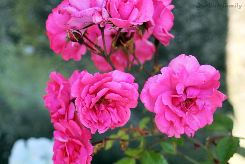 mon jardin 2