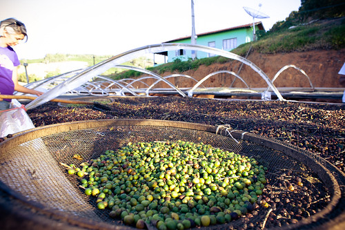 Drying naturals at Sitio Canaã