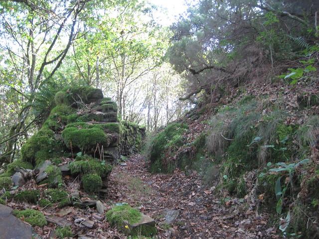 Camino en el PR-G 145 Ruta da Marronda - Alto Eo