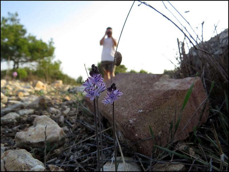 Botanicals | Flickr - Photo Sharing!