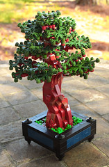 Bonsai by Brother Steven