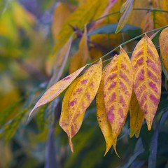 Autumn Leaf Colours