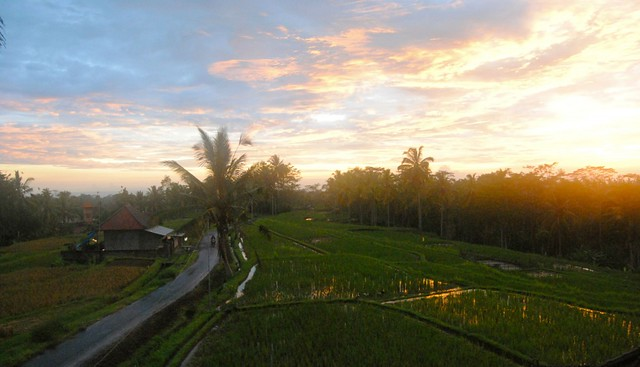 Sunset-Over-Rice-
