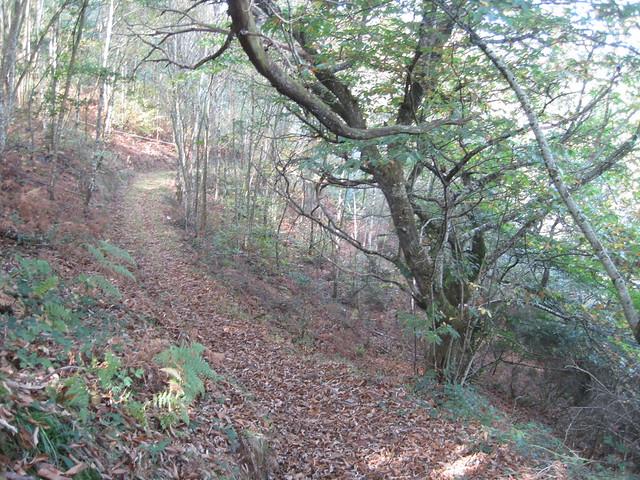 Sendero en el PR-G 145 Ruta da Marronda - Alto Eo