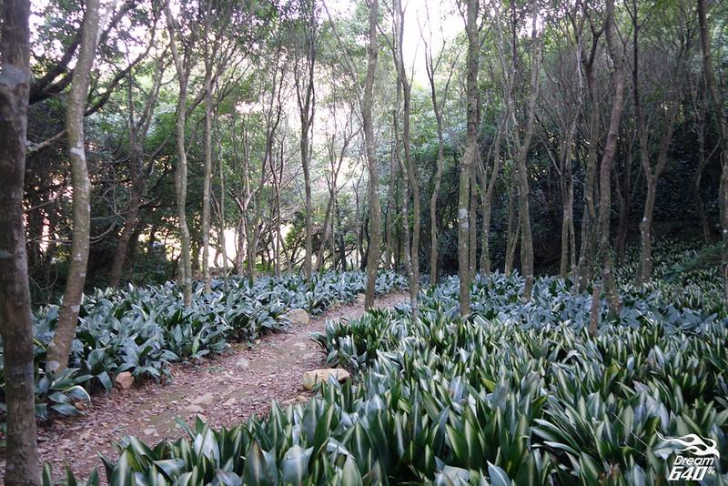 地表上不可能出現的銳利化森林「竹子湖青楓步道」。視覺多層次轉換,30分鐘就能走完