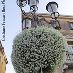 Piazza Prato della Valle, Padova, Italy