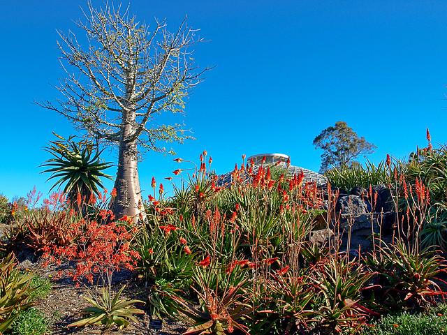 Arid Region - Brisbane Botanic Gardens Mt Coot-tha