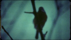 elly nieman | a Super8 movie STILL | by industrialbirds