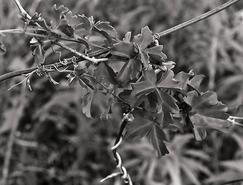 First Roll of Black and White from Linwoods Nikon | by enlighten-up
