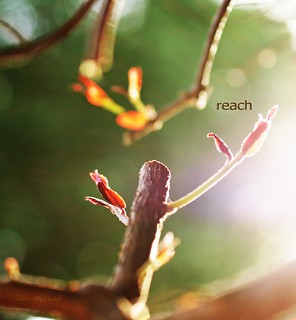 reach | by 30 years later