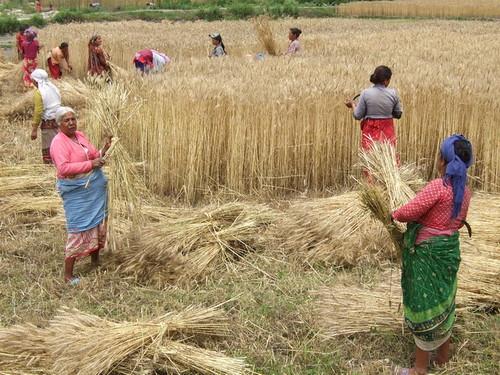 Nepali women seeking men
